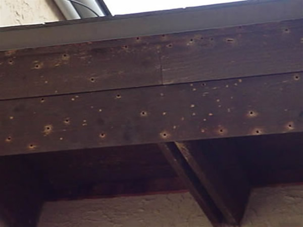 Carpenter Bee Holes And Damage To A Loganville Georgia Home