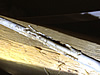 Electrical wires chewed by mice in an attic in Helena, Alabama