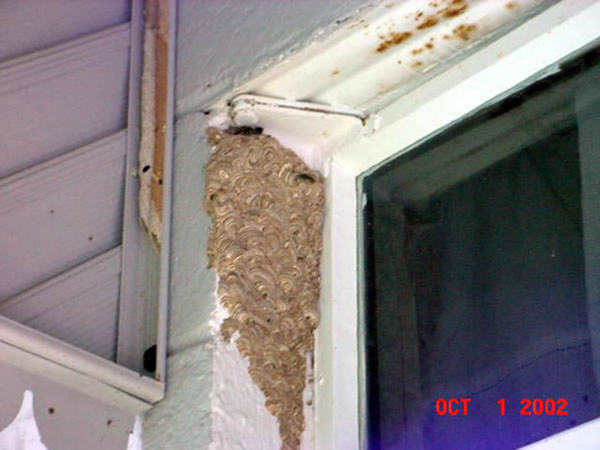 Stinging Insect Control Athens Roswell Columbus