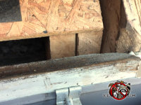 Construction gaps behind the rain gutter allowed bats to get into the house