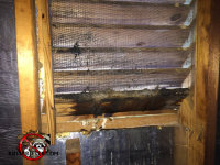 Bat guano and stains on the inside of an attic vent in a Macon, Georgia home