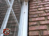 Half inch gap between the bricks and the window frame that need to be sealed in order to keep bats out of an apartment building in Macon Georgia