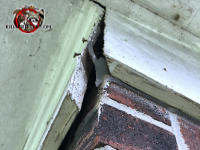 Gap in the miter joint in the frieze board allowed bats to get into the attic of a brick house in Collegedale Tennessee