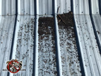 Bat guano on the roof of a commercial building in Anniston Alabama
