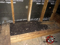 Large amount of bat guano in the attic of a home in Cordele, Georgia
