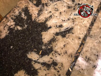 A pile of bat guano in the attic of a house in Valdosta Alabama