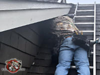 Man on a ladder with his head under a soffit sealing bats out of the attic of a house in Lake Martin Alabama