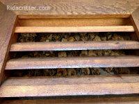 Many bats in a gable vent in an attic at a Birmingham, Alabama bat removal job