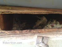 A gap in the edge of a roof that allowed bats into a home in Alabaster, Alabama