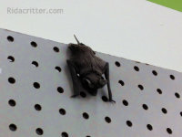 Bat on a pegboard removed from a commercial building in Birmingham