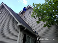 Man on a ladder bat-proofing a home in Moody, Alabama