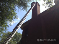 man on a long ladder removing honeybees from the chimney of a house in Birmingham
