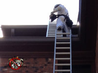 Technician on a ladder removing honey bees from a tall building in Macon