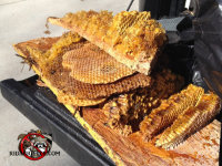 Honey bee hive on tailgate of a pickup after being removed from a house