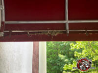 Bird nest in the fold of a canvas awning in front of a retail store in Albany Georgia.