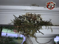 Bird nest on the top of a porch column in the front of a house in Columbus Georgia.