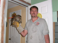 Bird control technician holding an owl rescued from a home