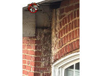 Pigeon droppings on the bricks outside the window of an apartment house in Chattanooga Tennessee