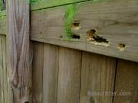 Carpenter bee holes in a wooden fence outside a house in Harrison Tennessee