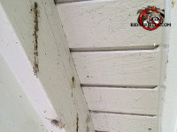 Carpenter bee holes in the wooden rafter of the roof of a house