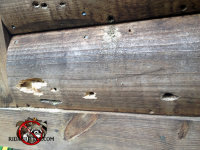 Carpenter bee holes in the wood of a house in Warner Robins, Georgia