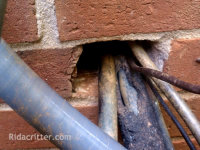 Rat hole around air conditioner pipes in brick wall of a house in Pell City, AL