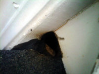 Hole under rain gutter at a Stockbridge, Georgia rat-proofing job