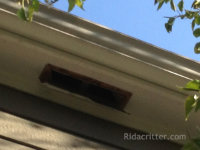 A soffit vent that allowed flying squirrels to get into a house in Birmingham, Alabama