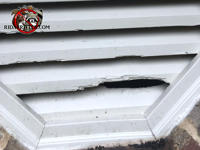 Flying squirrels gnawed a hole through the wooden slats of an octagonal gable vent at a house in Columbus Georgia.