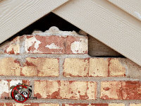 Missing bricks at the peak of the house allowed flying squirrels into an East Brainerd Tennessee home