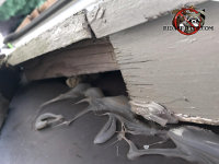 The homeowner tried to seal the flying squirrel out with caulking but the roof settled and opened a gap in the sealant