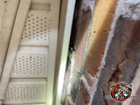 One inch gap between the frieze board and the bricks allowed flying squirrels into the attic of a Fort Valley Georgia home.