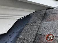 Small gap between the shingles and the roof trim at a junction point allowed flying squirrels into an attic in Homewood Alabama.