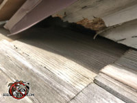 Gap between the shingles and the trim allowed flying squirrels into the attic