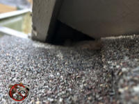 Small triangular gap between the shingles and the soffit panel needs to be sealed to keep flying squirrels out of a Columbus Georgia attic.