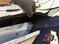 Flying squirrel gnawed a hole in the roof fascia at a house in Helena Alabama