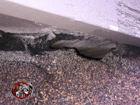 Flying squirrels gnawed through the shingles to get into a house in Macon