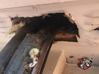 Flying squirrels got into a house in Macon Georgia through a hole in the soffit where the air conditioning pipes passed through