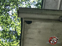 Flying squirrel chew hole in the corner of a plywood soffit panel at a house in Sylvester Georgia