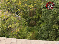View of the forest from the roof of a house during a flying squirrel removal job in Signal Mountain Tennessee