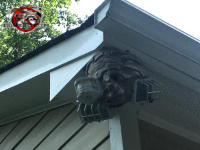 Hornets nest built around an exterior light fixture under the soffit of a house in Chattanooga Tennessee