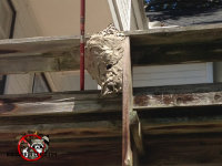 Hornets nest of the railing of a deck on the second floor of a Macon, Georgia house