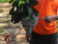 Technician holding a hornets' nest removed from a bush in Forsyth