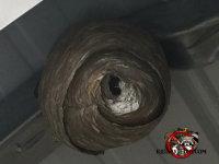 Hornets' nest under a steel awning in Warner-Robin, Georgia