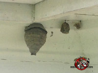Three hornets nests of different sizes hanging from the ceiling of a porch at a house in Barnesville, Georgia
