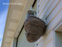 Hornets' nest hanging from an exterior light fixture of a house in Roswell, Georgia
