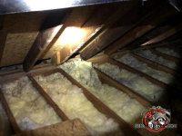 Flattened out insulation between the joists in the attic of a house in East Brainerd Tennessee