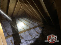 The insulation between the joists in an attic in Jasper Tennessee needs replacement because it is flattened out by animals and contaminated with their urine and feces