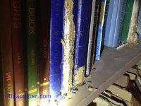 The spines of some hardcover books on a shelf damaged by mice in an attic