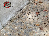 Mouse droppings on the cement floor of the garage of a house in Collegedale Tennessee